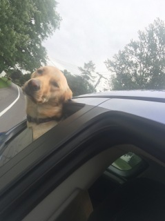 I'm suuuuper dog!